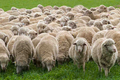 What Is Merino Wool (And Why Should You Buy Clothes Made From It)?