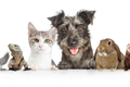 How to Pick the Right Pet for Your Family