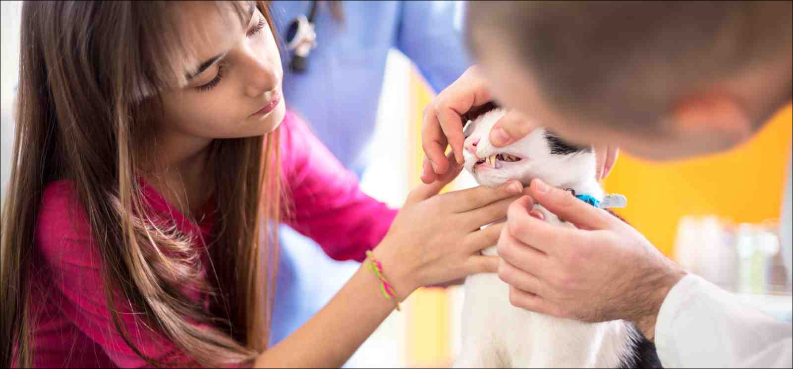 Vet specialist at work checking cat's mouth and teeth in vet clinic