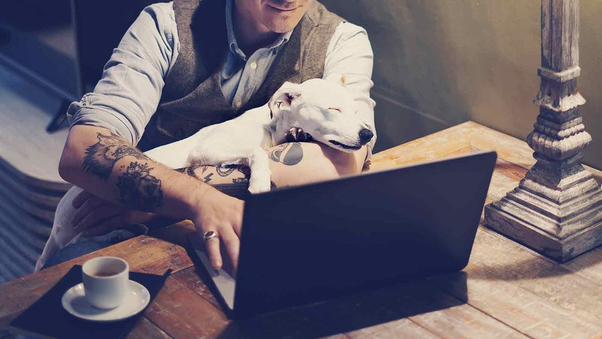 Man with tattoos on his arms working on a laptop with a dog sleeping in his lap.