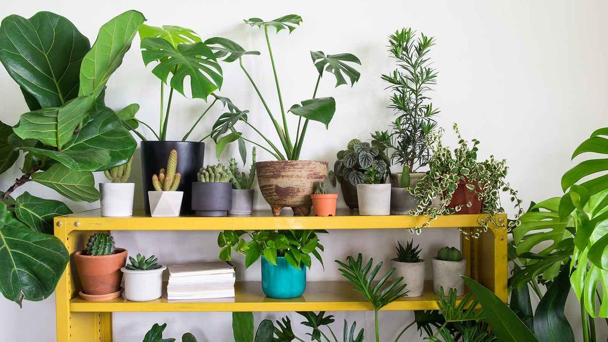 Indoor shelf full of houseplants and cacti.