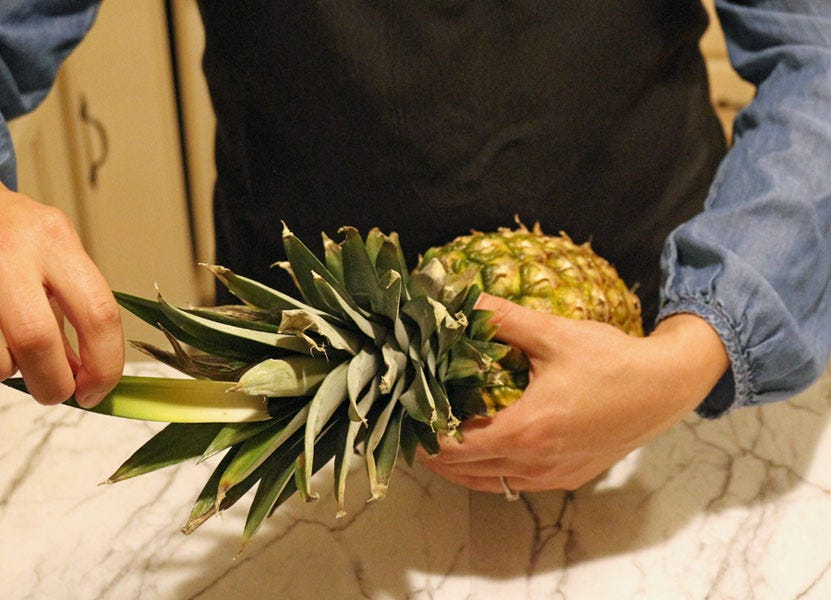 Pulling the center leaf of a pineapple out to check for ripeness.