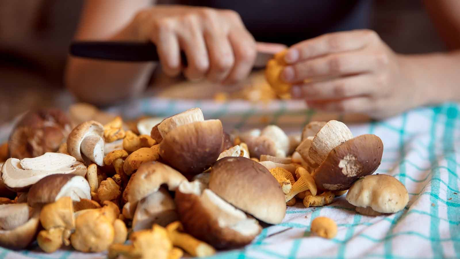 Woman cleaning wild mushrooms in the kitchen, porcini and chanterelles in the front