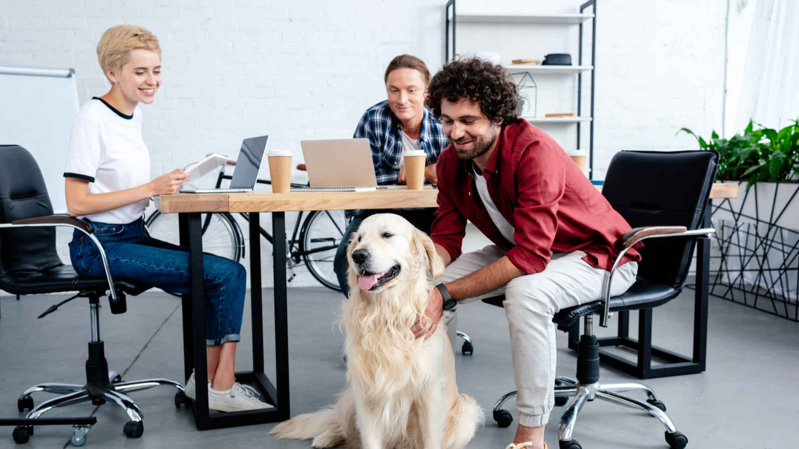 A group of people at a table in an office watching a coworker pet a dog.