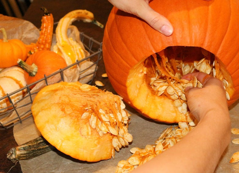 Scooping pumpkin seeds out of a large carving pumpkin.