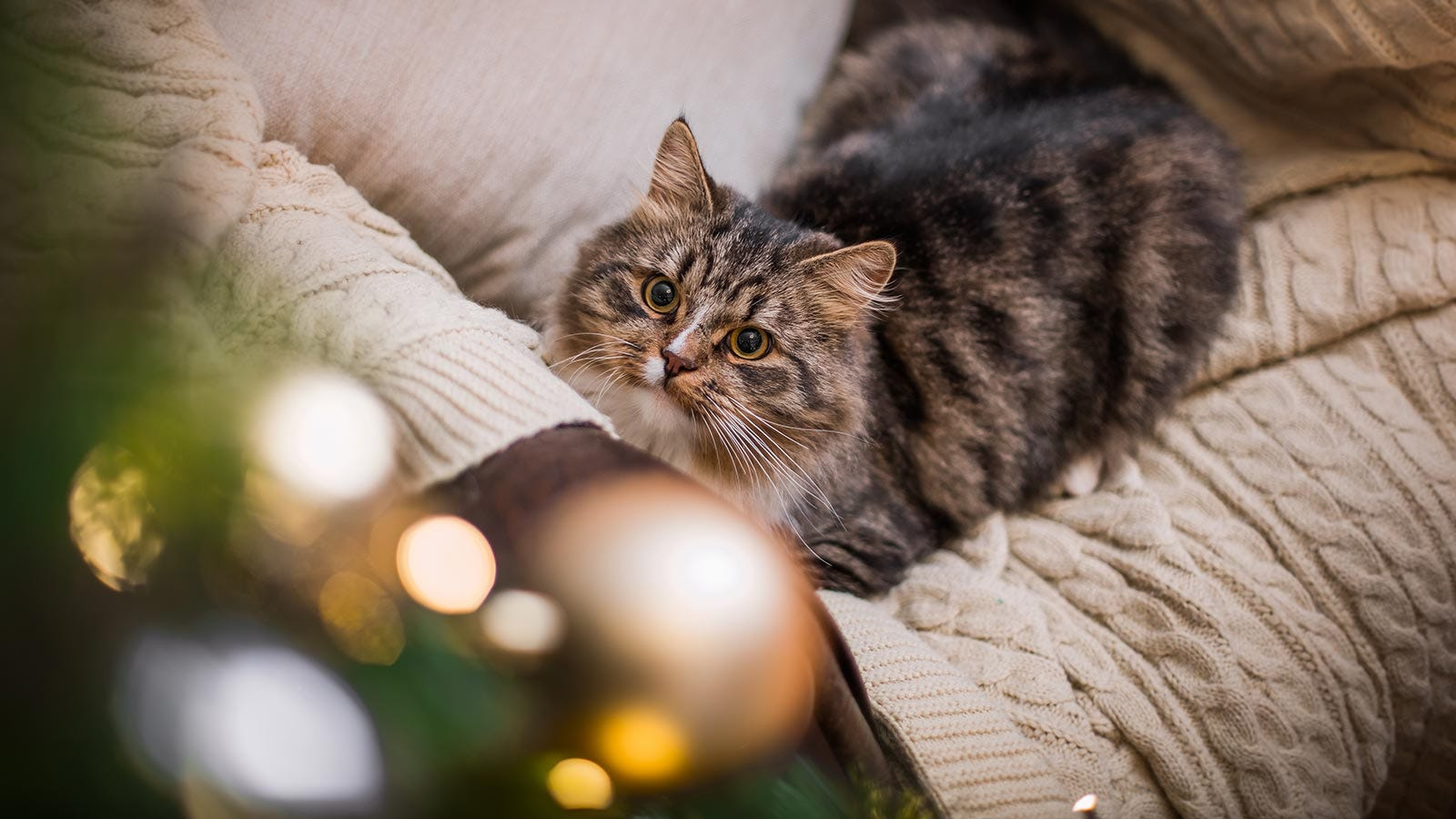 A tan and black tabby cat lying on a sofa with golden eyes fixed on the sparkly ornaments on a Christmas tree.