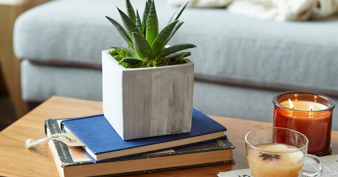 A houseplant in a small concrete planter sitting on a stack of books on a coffee table.