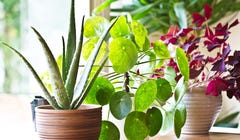 7 Houseplants Anyone Can Keep Alive