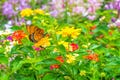 5 Plants that Attract Bees and Butterflies to Your Yard
