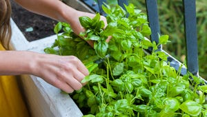 Freeze Fresh Herbs and Enjoy Them All Year Long