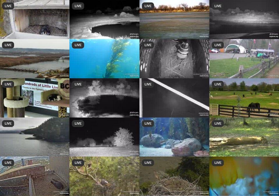 Explore.org's stream catalog