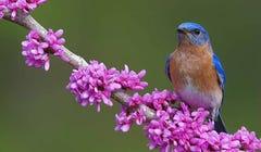 4 Creative Ways to Celebrate National Audubon Day