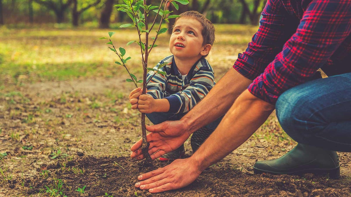 A man's hands and arms helping a little boy plant a small tree.