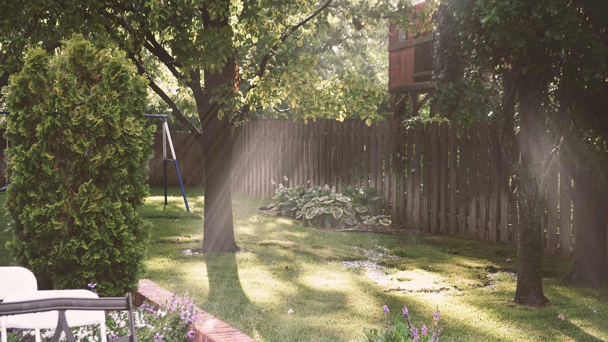 A beautiful backyard with sunlight streaming through the trees.