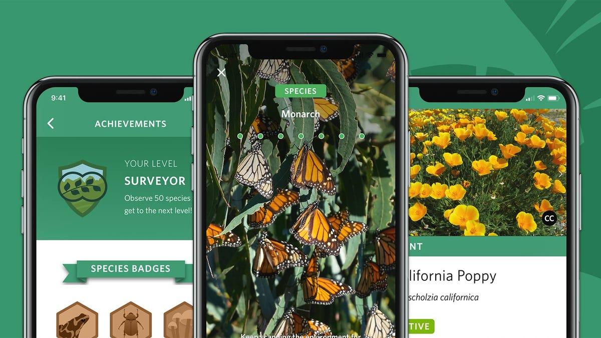 The Seek app on a phone identifying Monarch butterflies.