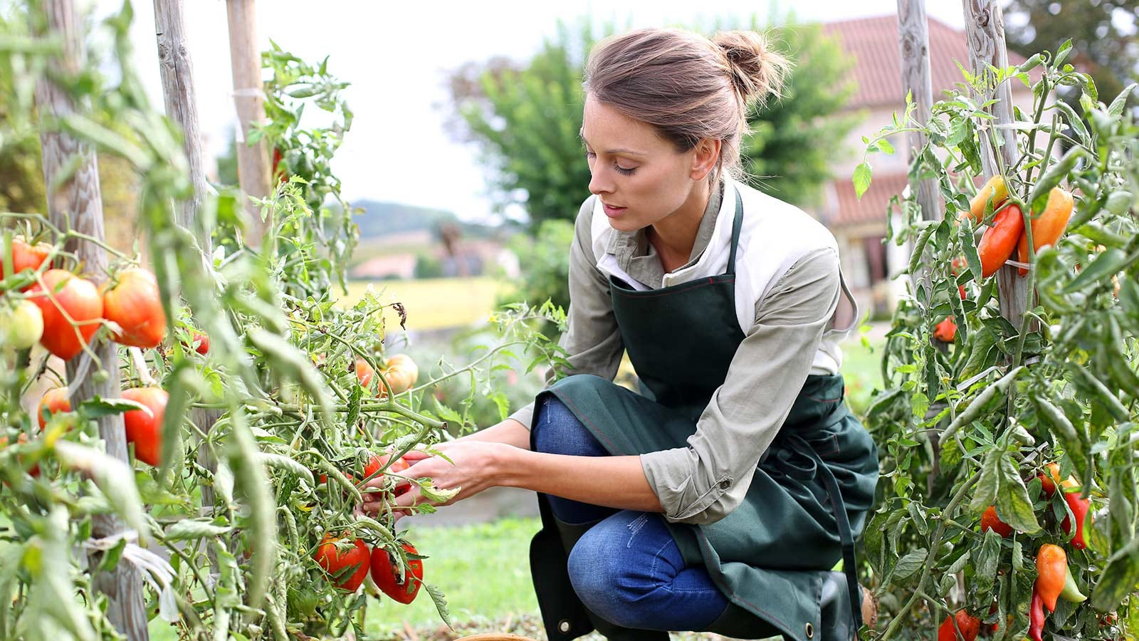 A woman picking vegetables off a vine in her garden.