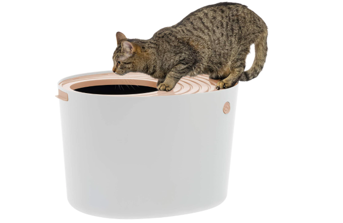 white bucket-like litterbox with a tabby cat