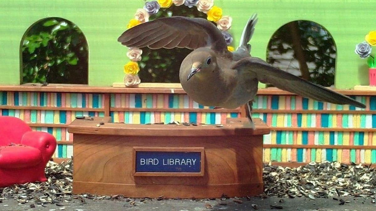 A pigeon sit on top of a mini library desk at the Bird Library feeder.