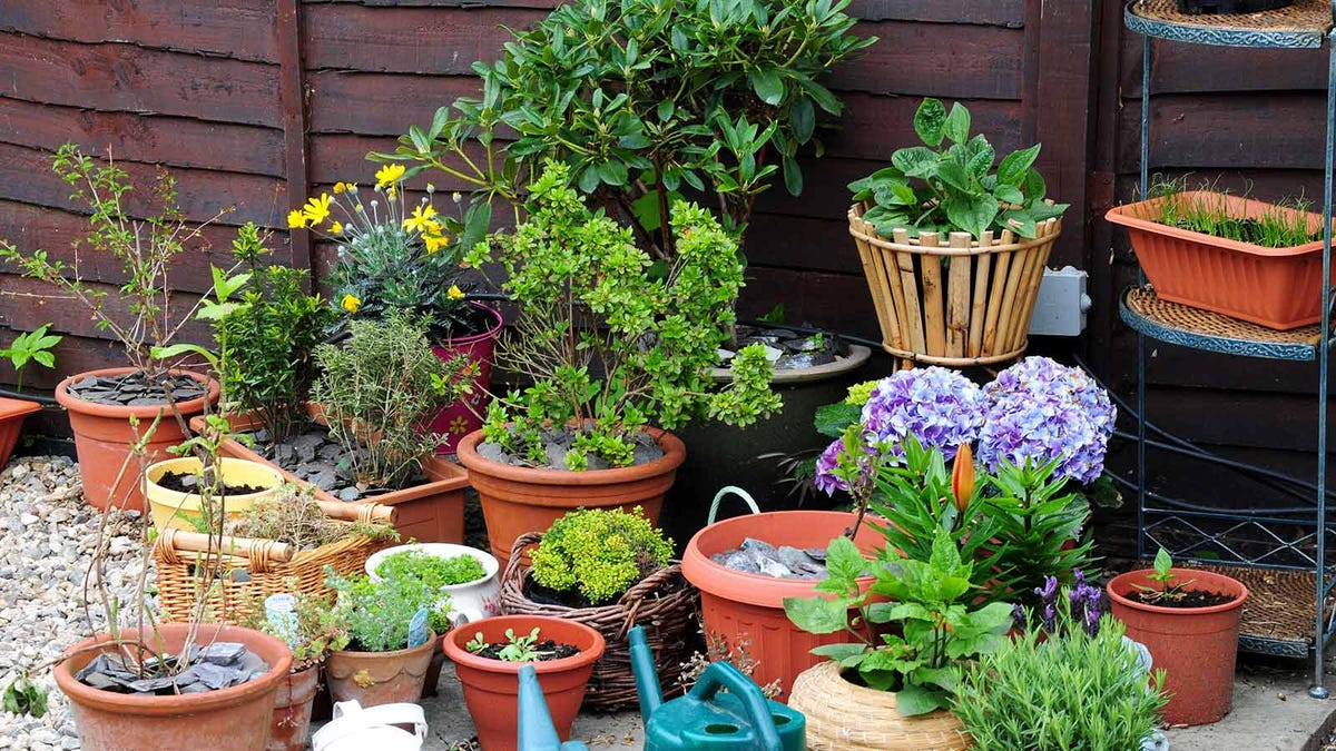 A variety of containers with plants sitting on a patio.