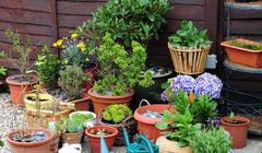 How to Choose the Right Planter for Your Container Garden