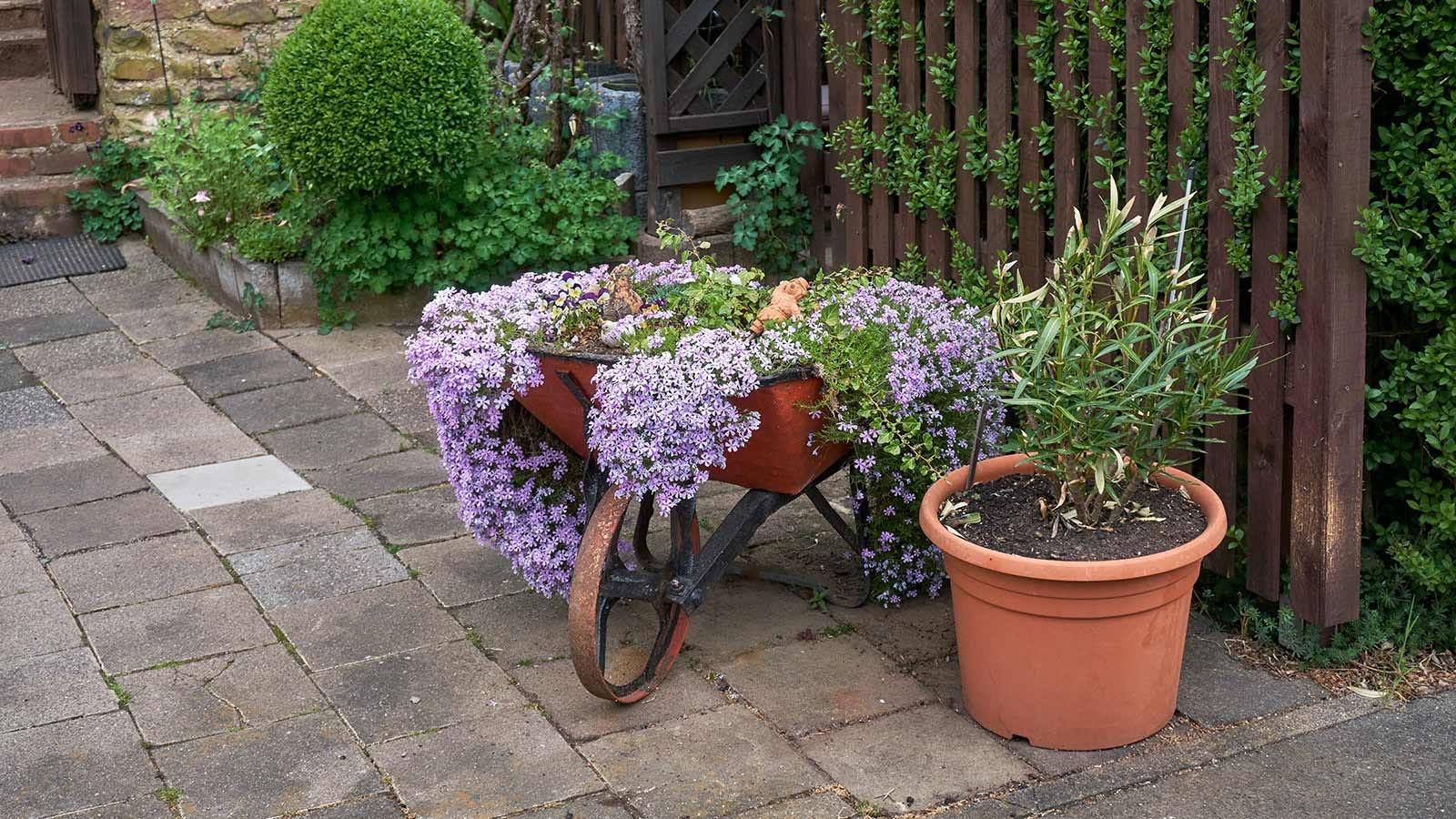 An old wheelbarrow full of flowers on a patio.