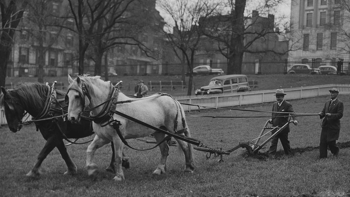 Men in suits walking behind two horses pulling a plow through a World War II public victory garden.