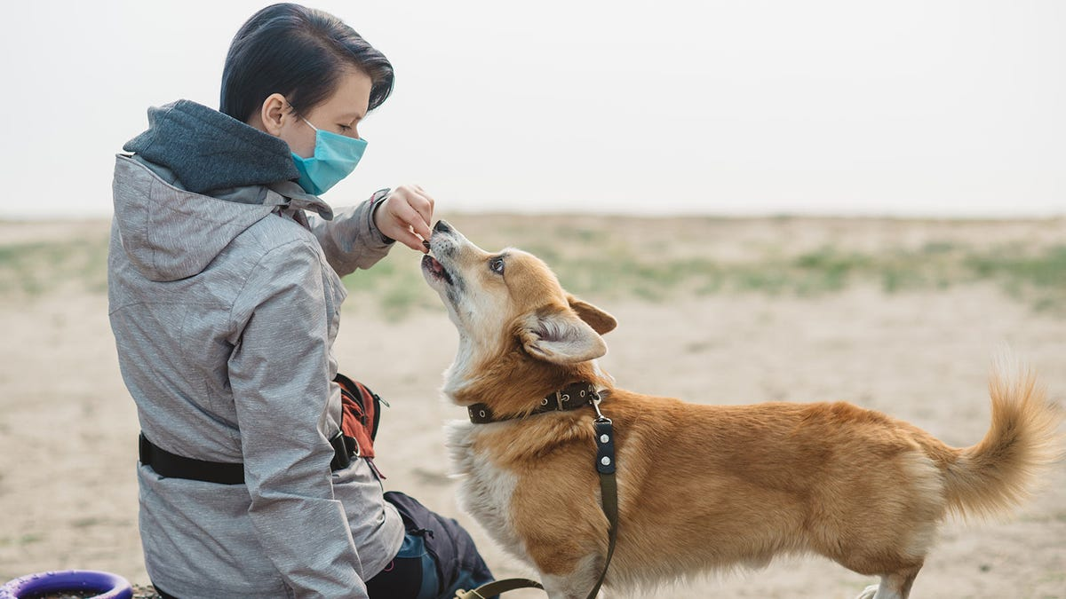 A woman wearing a mask and feeding her dog a treat while out on a walk.