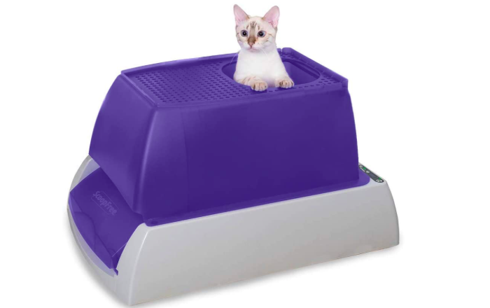 purple and gray litterbox with a white cat inside