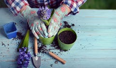 How to Select Potting Soil for Your Container Garden