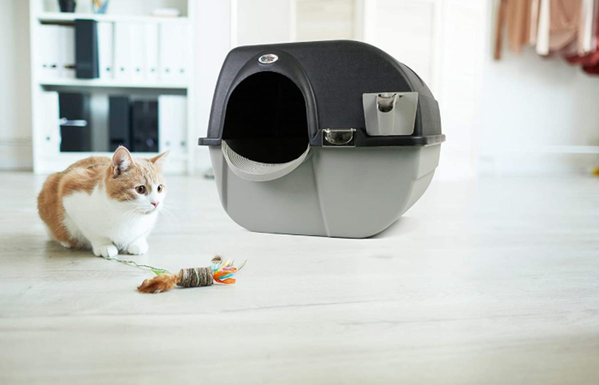 orange and white cat in front of a rounded dark and light gray litterbox