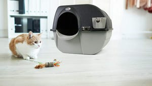 The Best Litter Robots for Your Cat