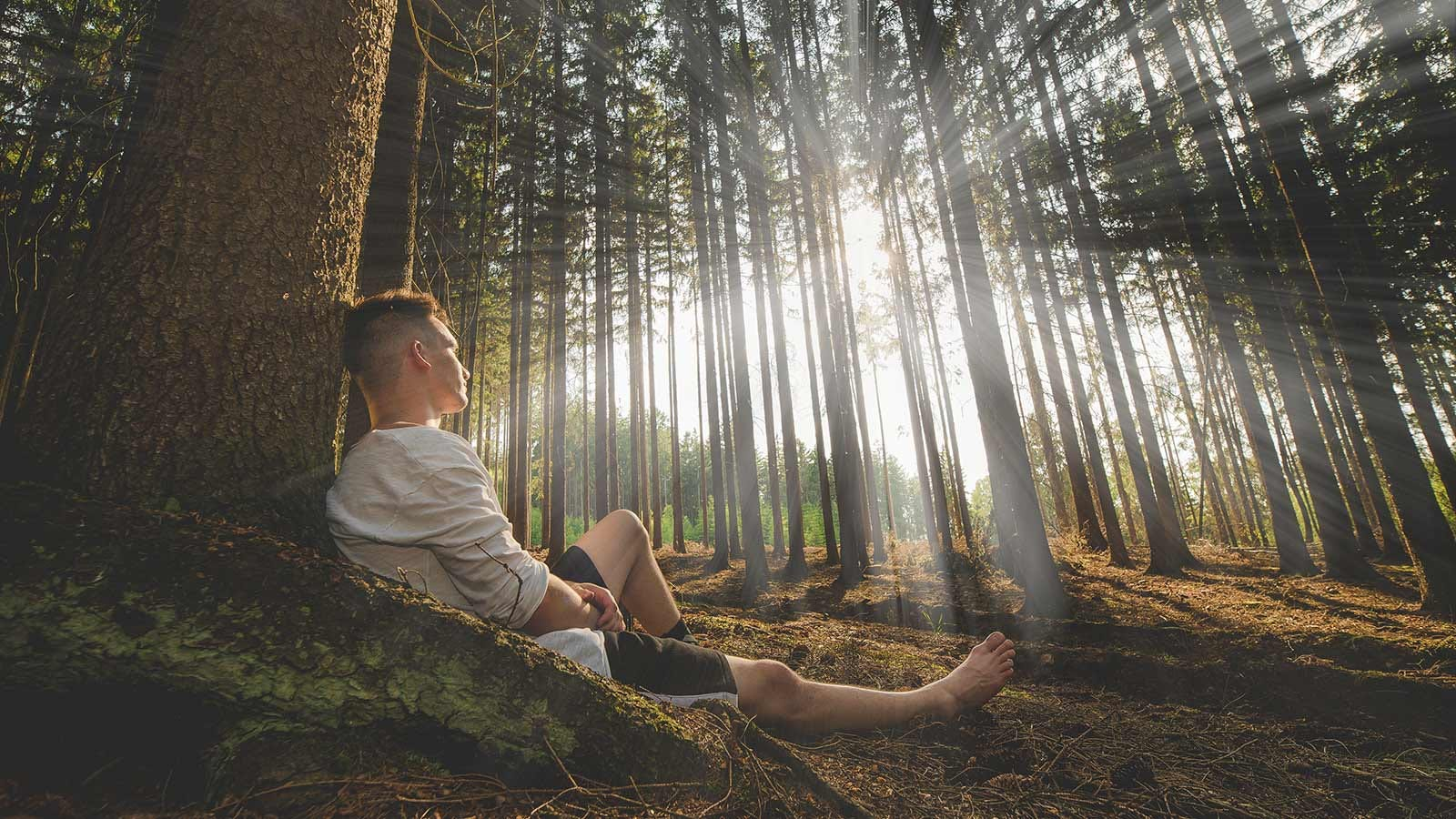 Man leaning against a tree in a forest while the sunshine streams through the trees.