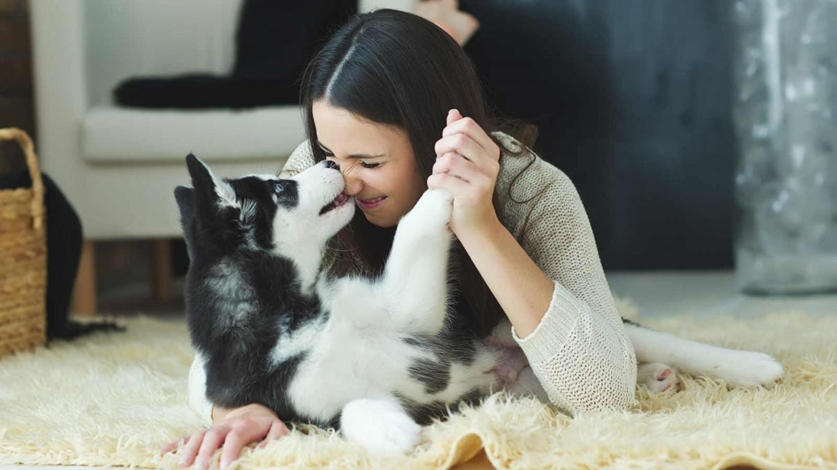 A woman plays with a husky puppy on the floor.