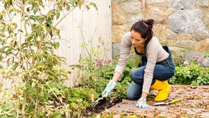 Do These Things Now for a Great Garden Next Year