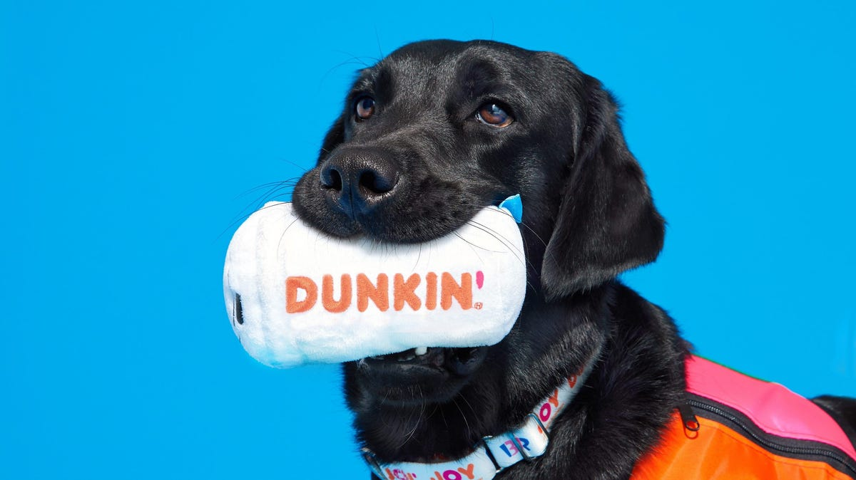 Black dog with Dunkin' toy.