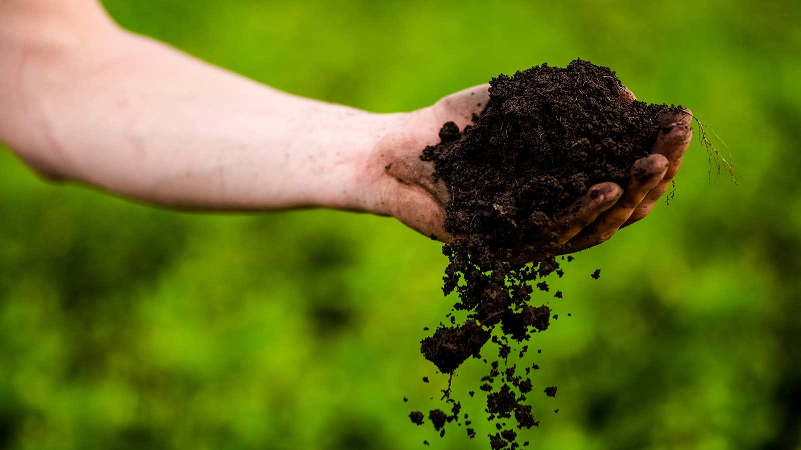 Someone with a handful of fresh soil.