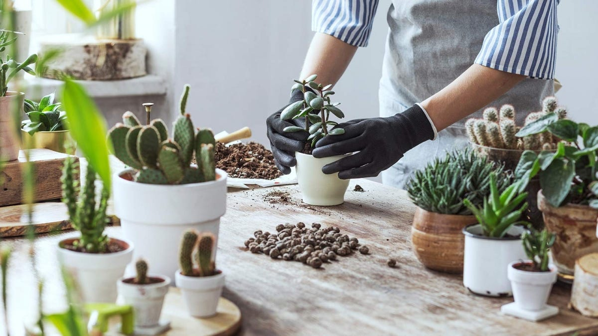 A person pots a succulent into a white container surrounded by other plants and soil.