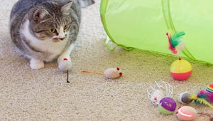 The Best Toys for Indoor Cats