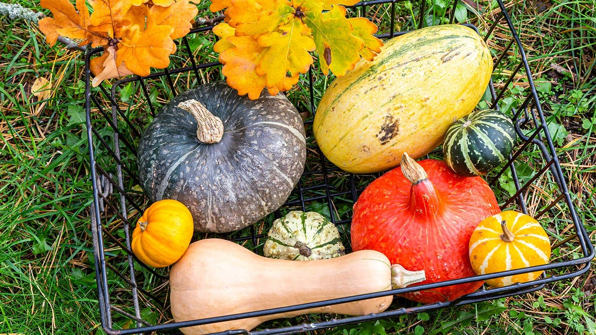 A wire basket filled with different squashes sitting on the ground.