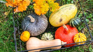 The Essential Guide to Fall Squashes