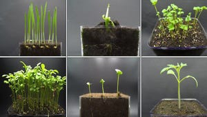 Plants Time-Lapse Dancing to Jazz Is the Friday Chill You Need