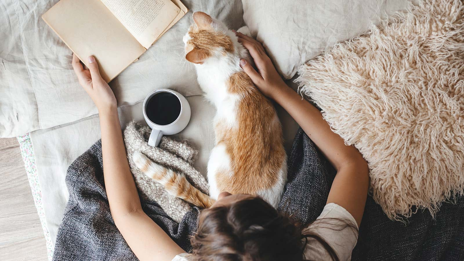 A woman sitting in bed reading with an orange and white cat on her lap.