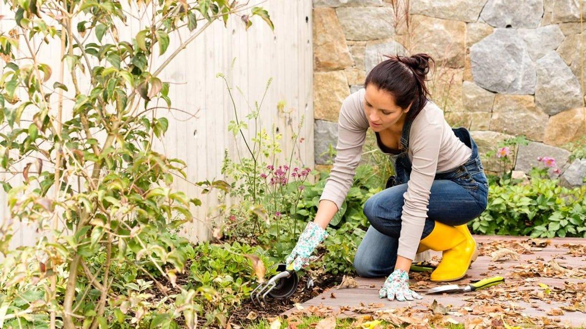 A woman pulls weeds from a garden.