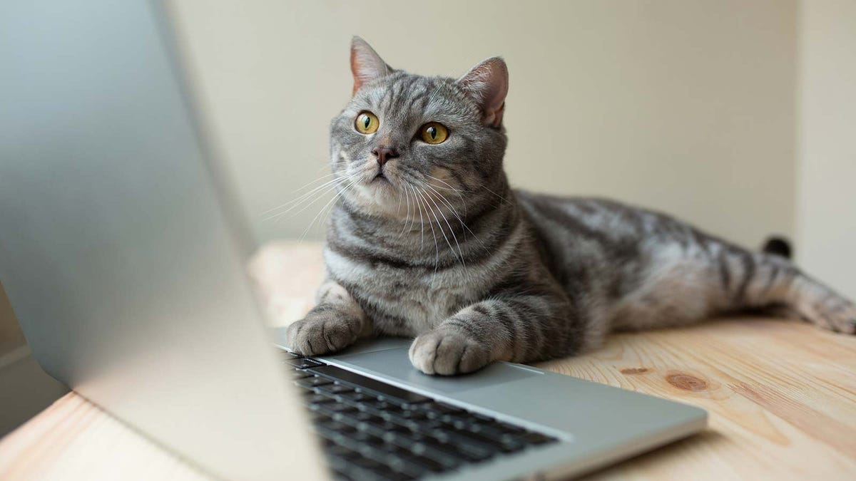 A cute gray cat sitting on a table with its paws on a laptop.
