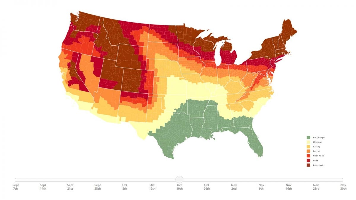 A map of the united states is show in vary shades of green, red, yellow, and orange to illustrate peak fall colors.
