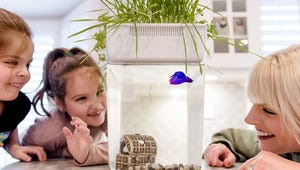 The Best Aquariums for Your Home