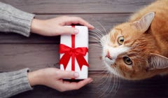 Holiday 2020: 19 Great Gifts for Cats and Their Doting Owners