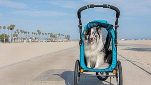 The Best Strollers for Every Kind of Dog