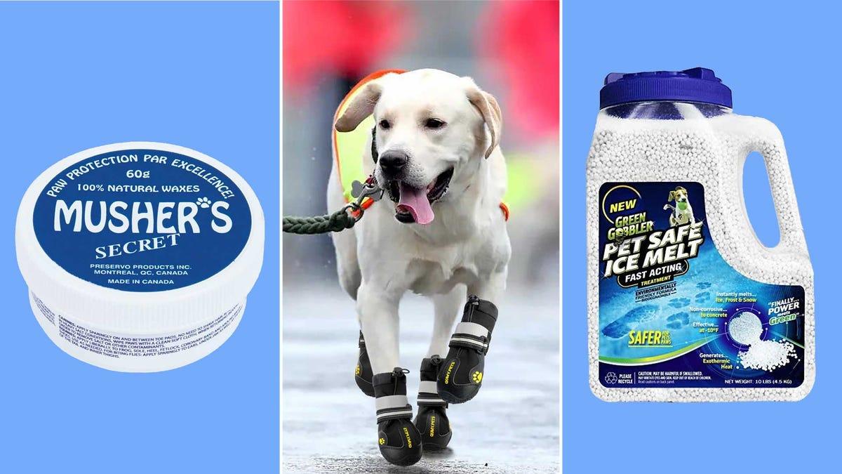 Paw wax, a dog wearing boots, and pet-safe sidewalk salt.