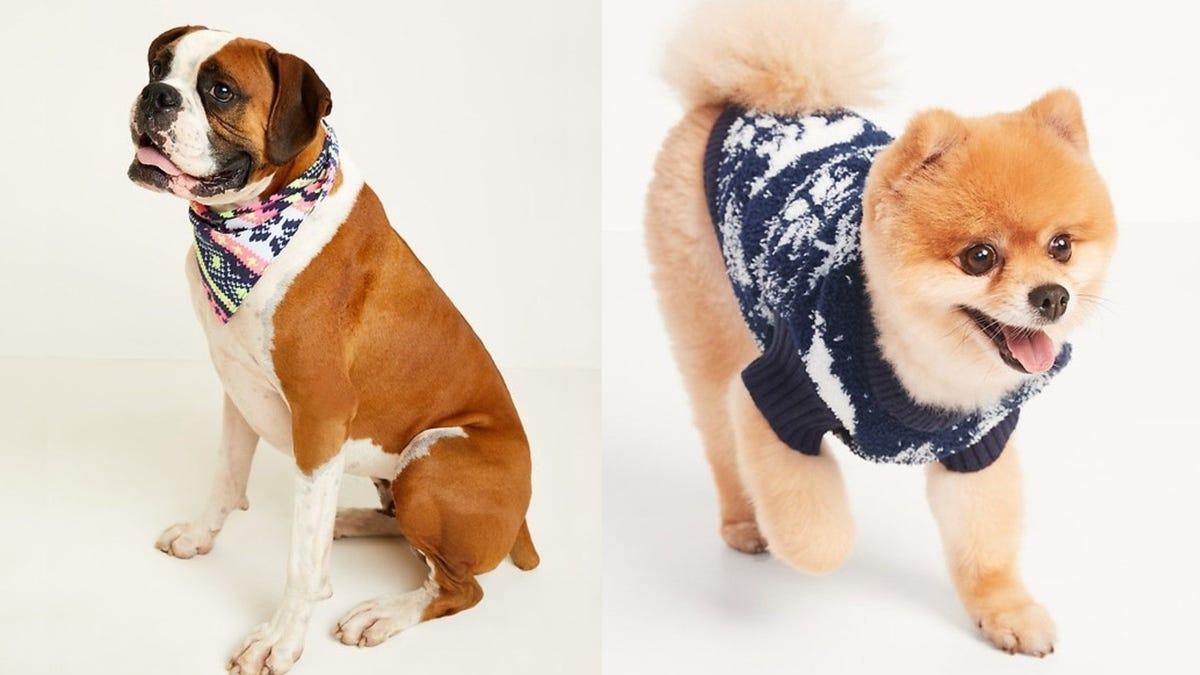 A boxer wears a pink, white and blue patterned bandana, and another small dog wears a Christmas sweater.